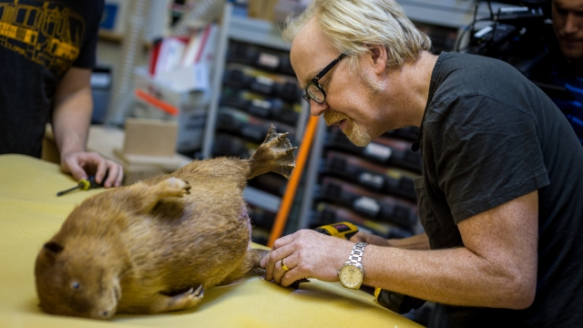 One Day Builds: Adam Savage's Traveling Beaver Box