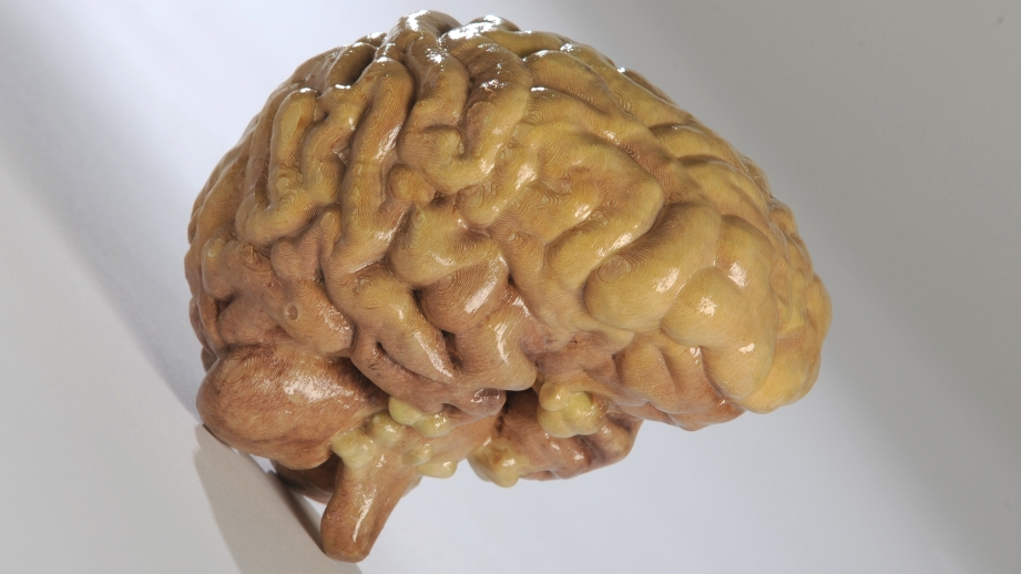 Full-color 3D print of a brain, made of paper. Credit: Mcor
